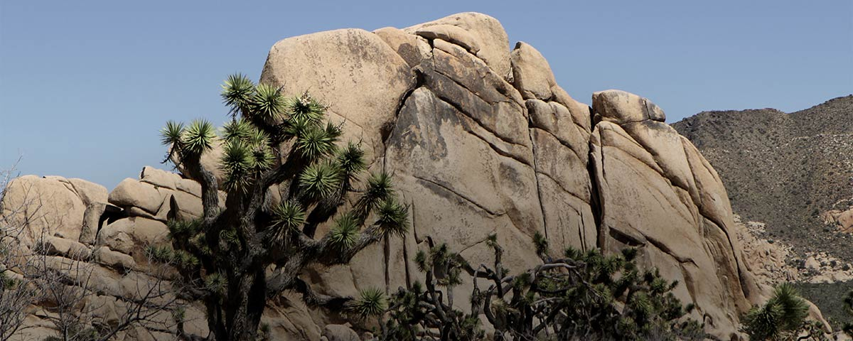 Photograph of Joshua Tree National Park