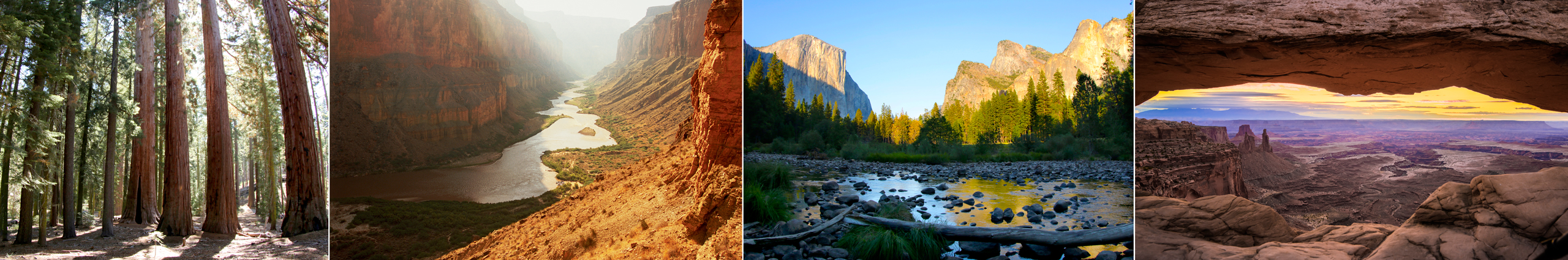 Left to right: Views of the sequoias at Yosemite National Park, the Colorado River at the Grand Canyon, Cathedral Rocks at Yosemite, and the Mesa Arch at Canyonlands National Park