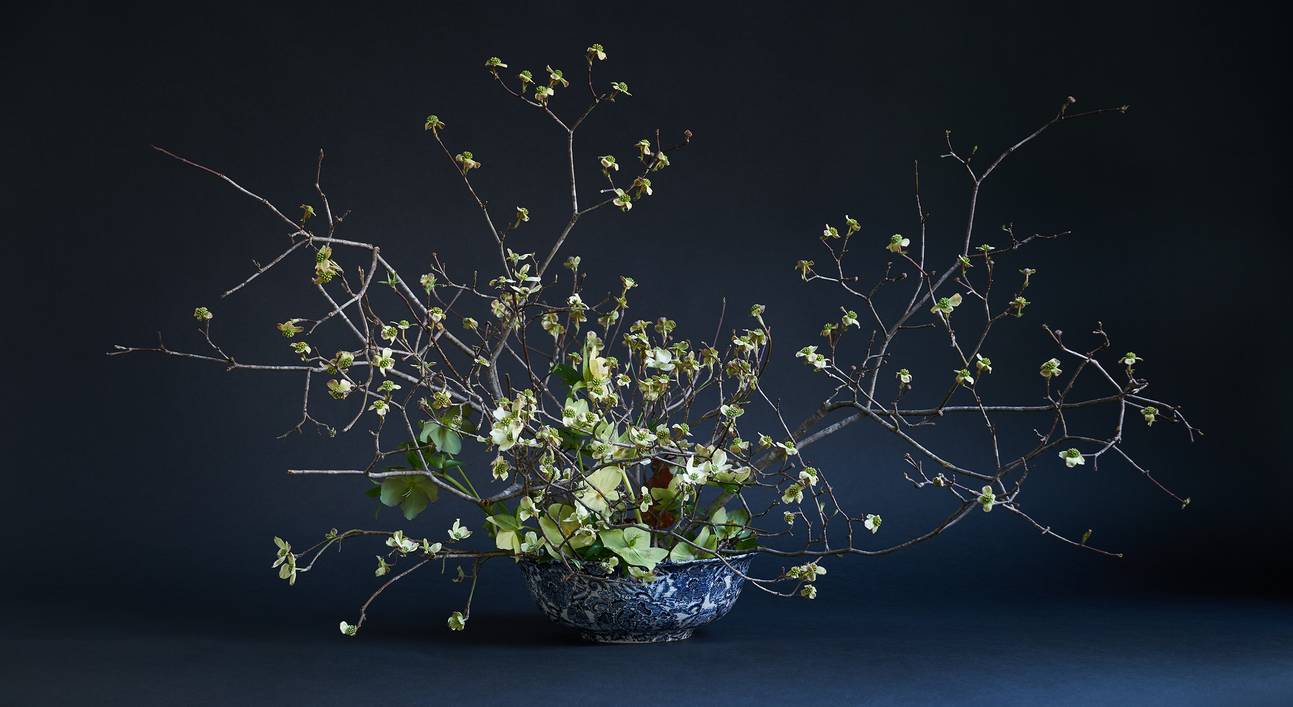 """I love to work with branches, and flowering dogwood is one of the most evocative because of their form and the contortions. In this arrangement, they are stuck into a kenzan flower frog, which is a Japanese technique that allows for a lot of air in an arrangement. It can be easily affixed to the bowl with flower gunk—a commercially available adhesive that won't get dislodged when you add water. The goal is to expose the beautiful inside of the bowl and create the feeling as if you're almost diving in. I added Lenten rose, which is the first flower up through the snow besides the snowdrop. They're a five-petal flower but have a direct relationship to the dogwood form, and that repetition is what I was after. The only other materials in there are a few begonia leaves. I've mostly put them in the back so it rewards somebody who does come up on this from behind."""