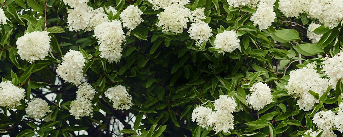 Close-up of plant with white flowers