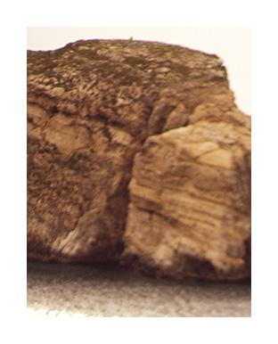 Closeup of rock in desert